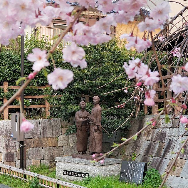 伏見の桜(小)_005
