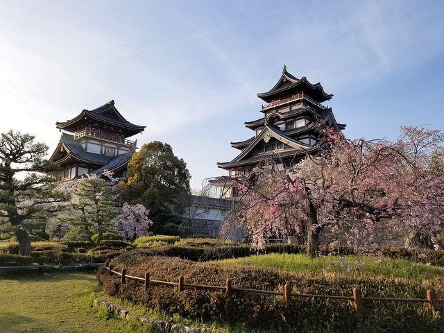 伏見の桜(小)_012