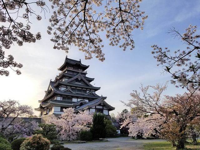 伏見の桜(小)_013