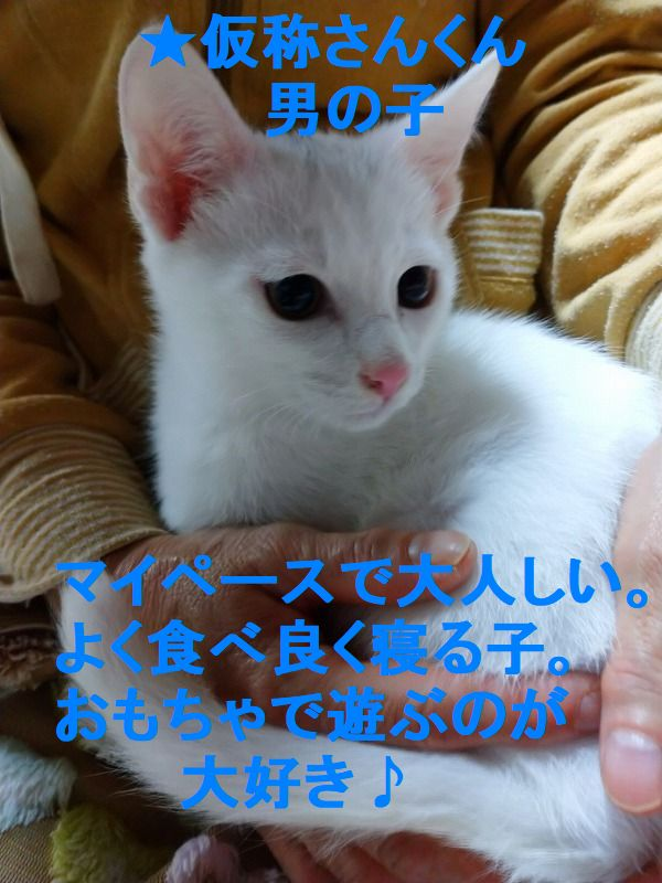 333_20201125214017c53.jpg
