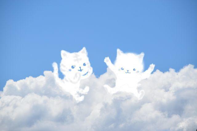 雲の上で 猫が会話