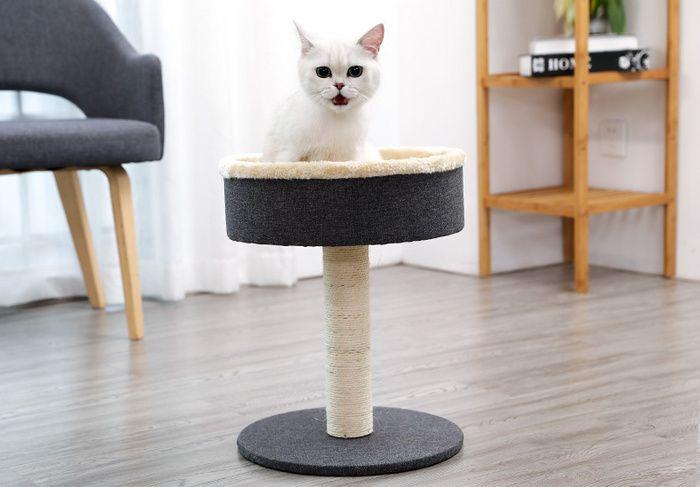 台に乗った猫