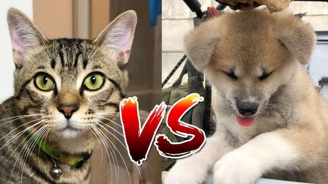 猫と犬はライバル