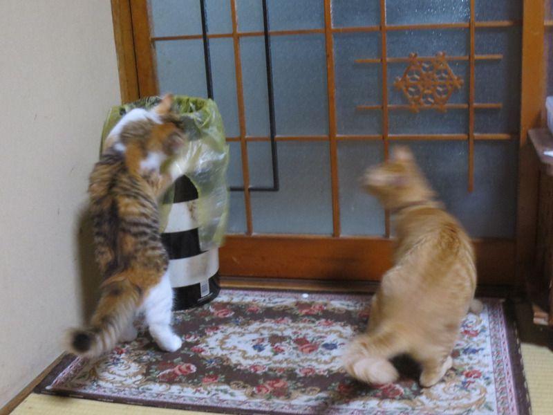 ハチミツが好きな猫