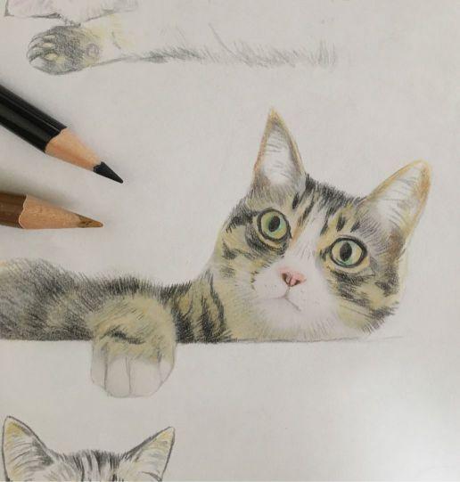 色鉛筆で描いた猫