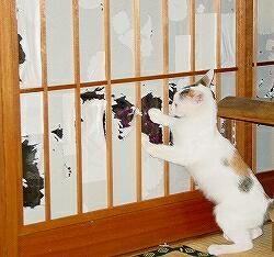 血気盛んな猫
