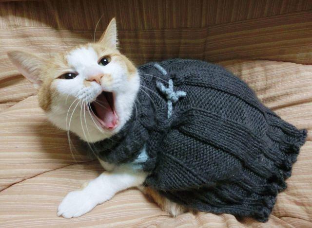 民謡を歌う猫