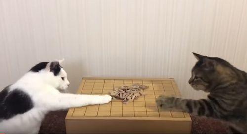 将棋を指す猫