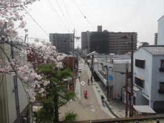 滋賀草津川跡地公園de愛ひろば桜花見
