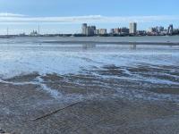 淡水河の干潟200524