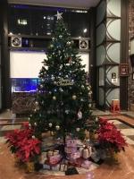 クリスマスツリー201229