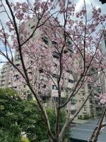 桜210216