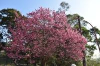 桜210130