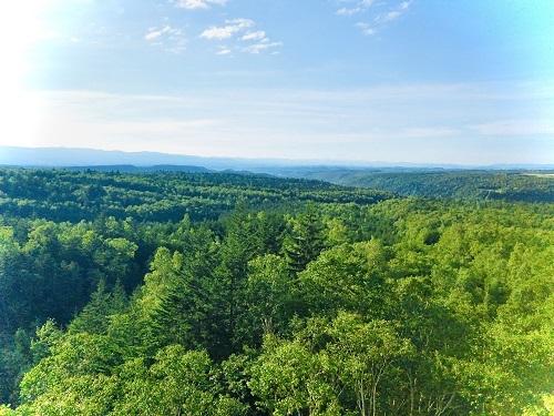 樹林を眺めて