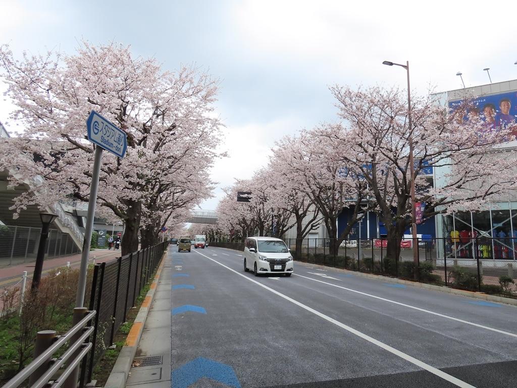 スタジアム通りの桜並木(その1)