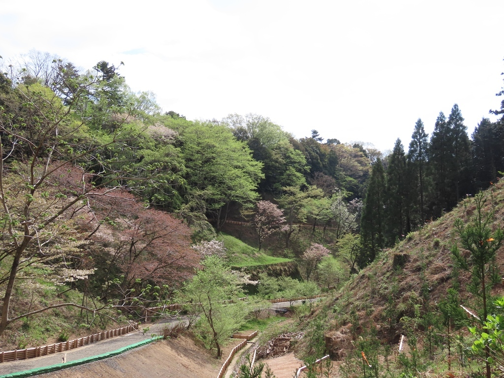 園内の新緑の風景