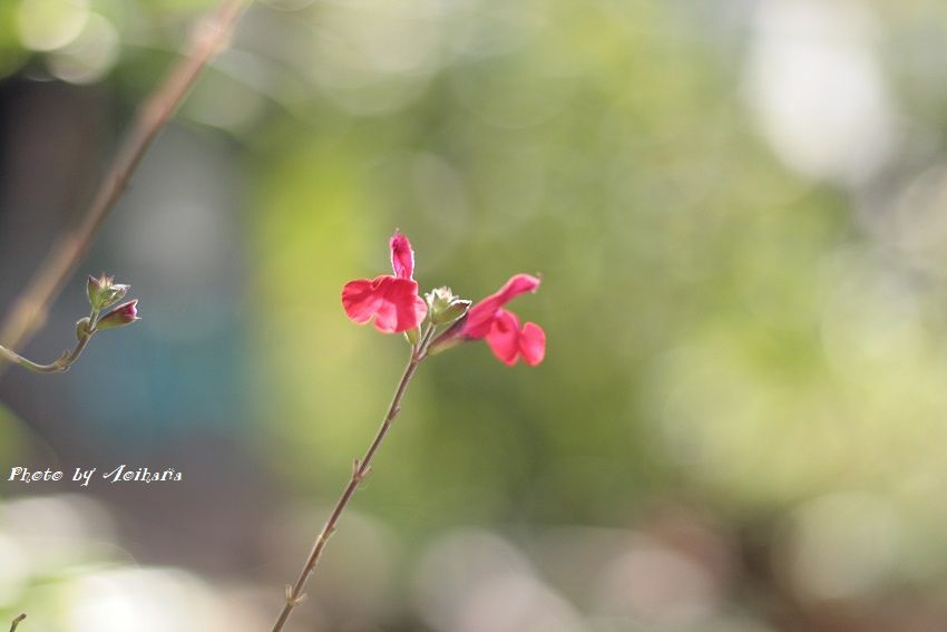 IMG_6254-850-p-cherry.jpg