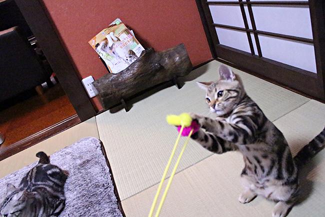 blog_000002377.jpg
