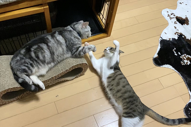 blog_000002537.jpg
