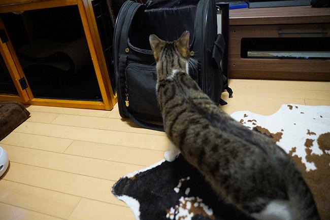 blog_000023032.jpg