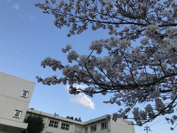 200410-朝のお花見02
