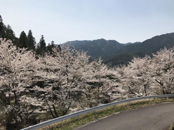 200416-牧戸の桜01