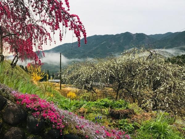 200421-春の植物