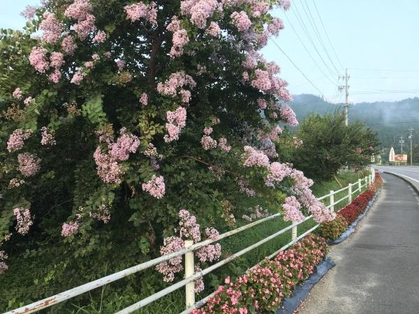 200825-国道沿いの花壇