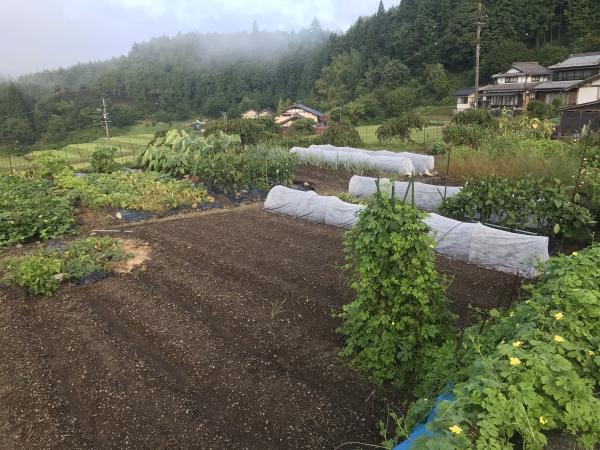 200831-家庭菜園
