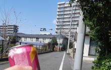 potunosakura18554.jpg