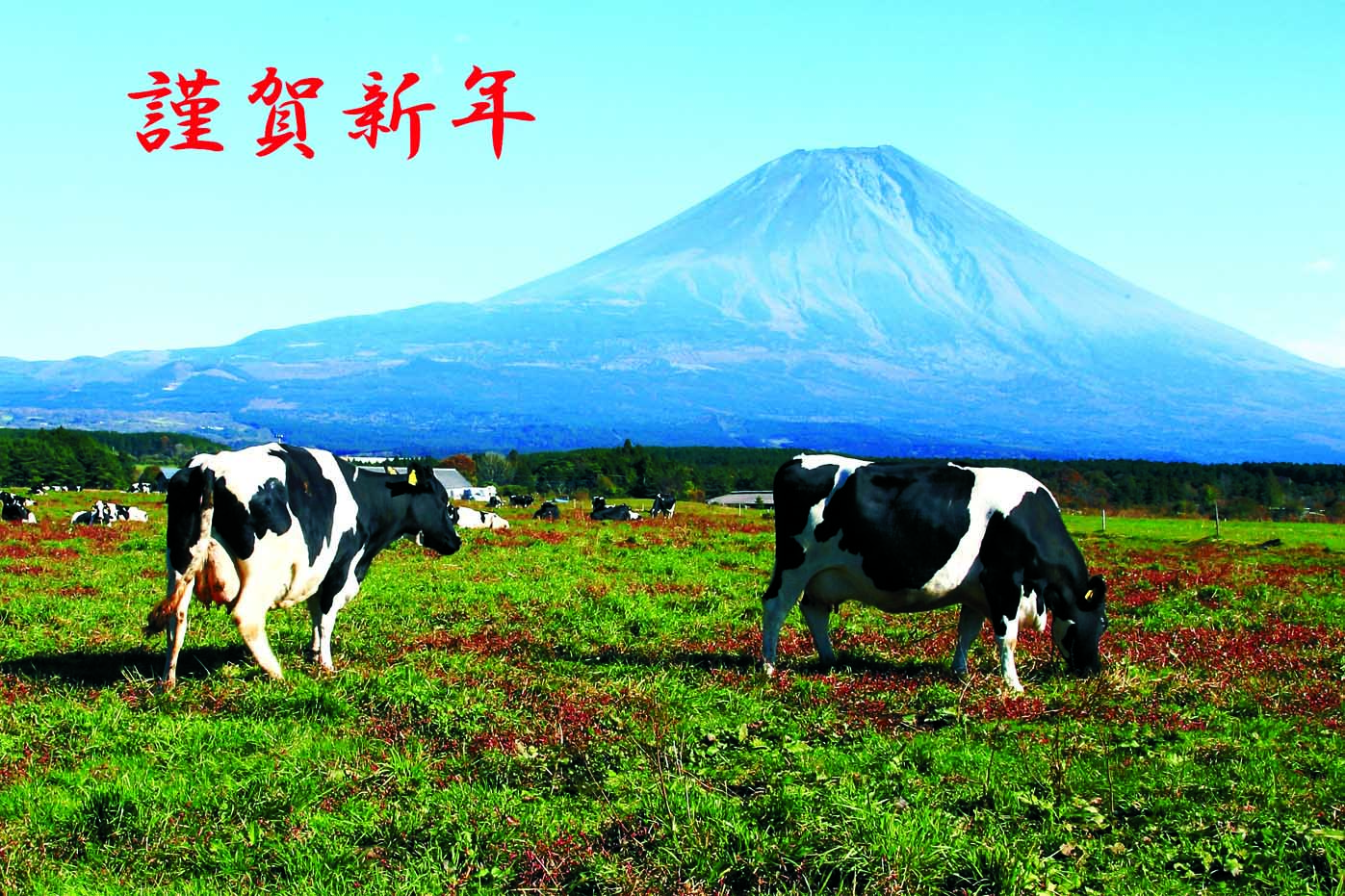 guroguyou 1