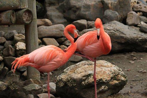 flamingo-4236085__340.jpg