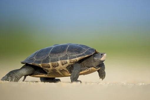 turtle-1850190__340.jpg