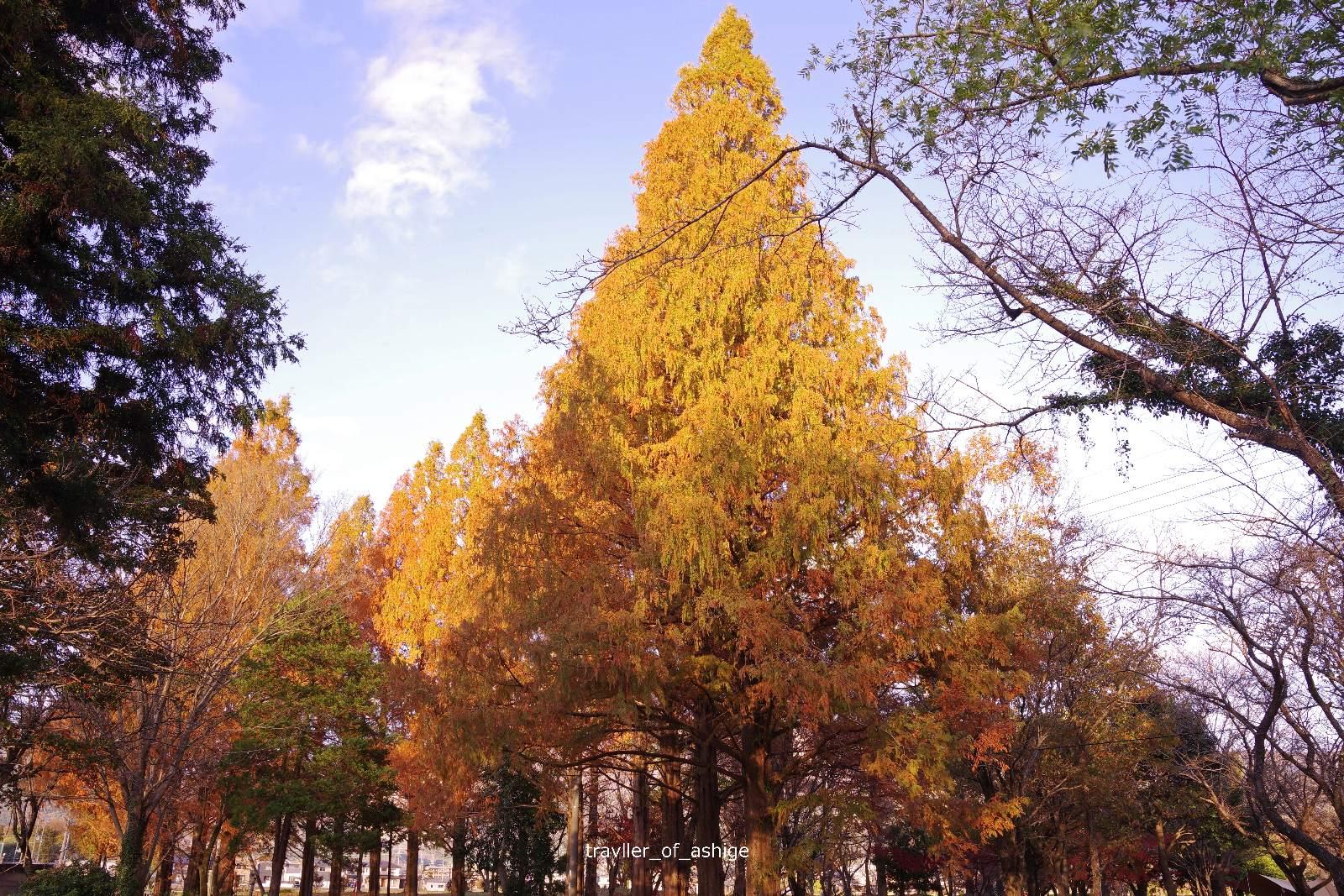 IMGP1608 三島池自然公園_1