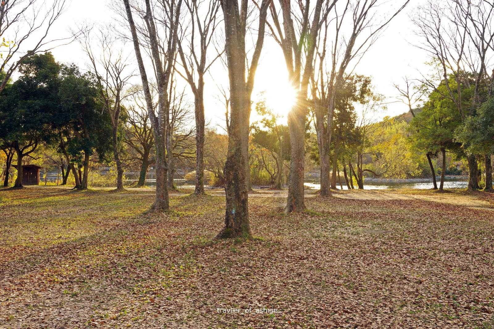 IMGP1643 三島池自然公園_3