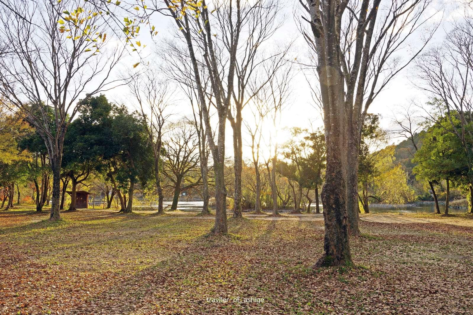 IMGP1648 三島池自然公園_5