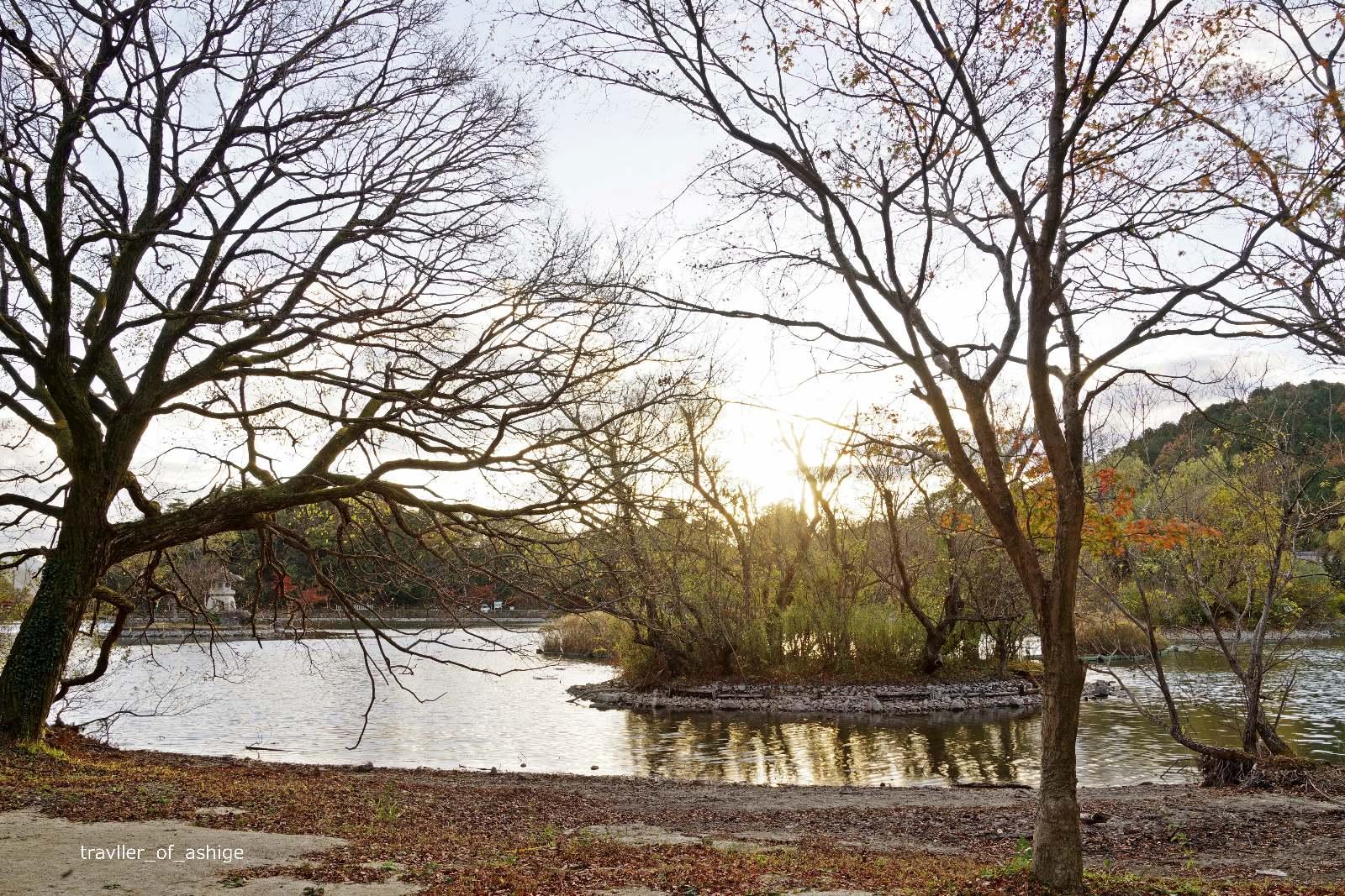 IMGP1659 三島池自然公園_8