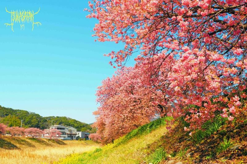 20210222_at_minami_izu_town_04