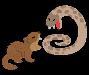 habu_vs_mongoose.png