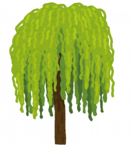 tree_shidare_yanagi.png