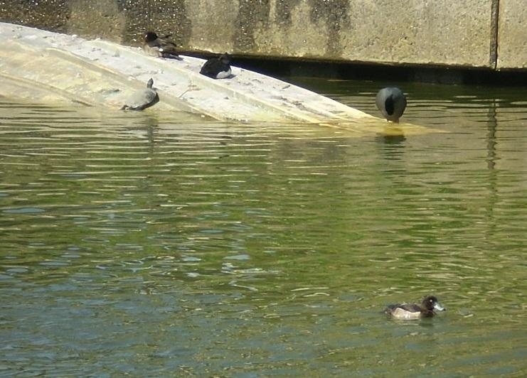 廃船でくつろぐ鳥さんとカメさん