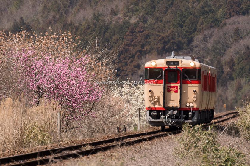 020321tsuyama-1.jpg