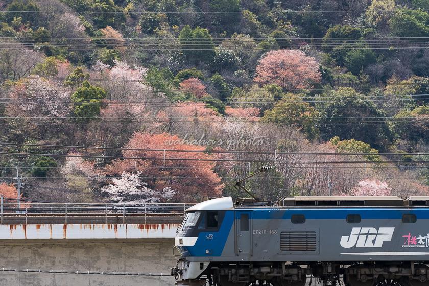 020329kamotsu-2.jpg