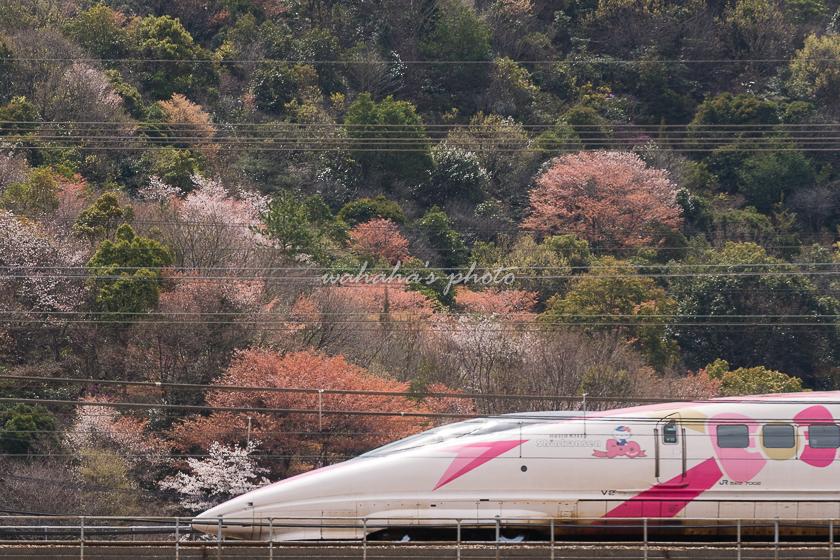 020329sinkansen-1.jpg