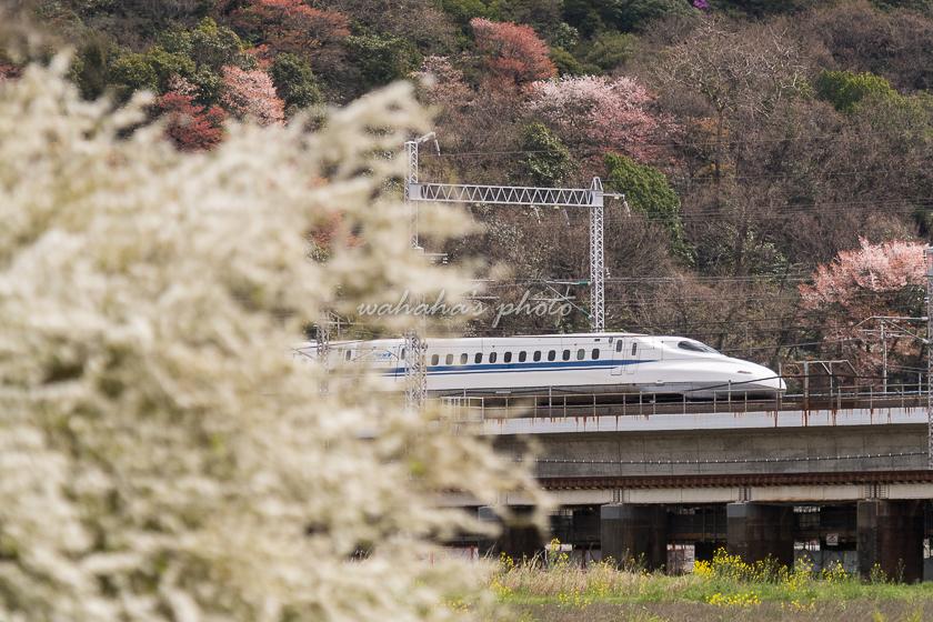 020329sinkansen-2.jpg