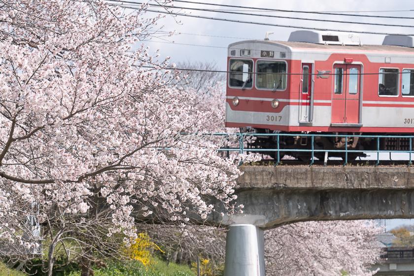 020405minogawa-1.jpg