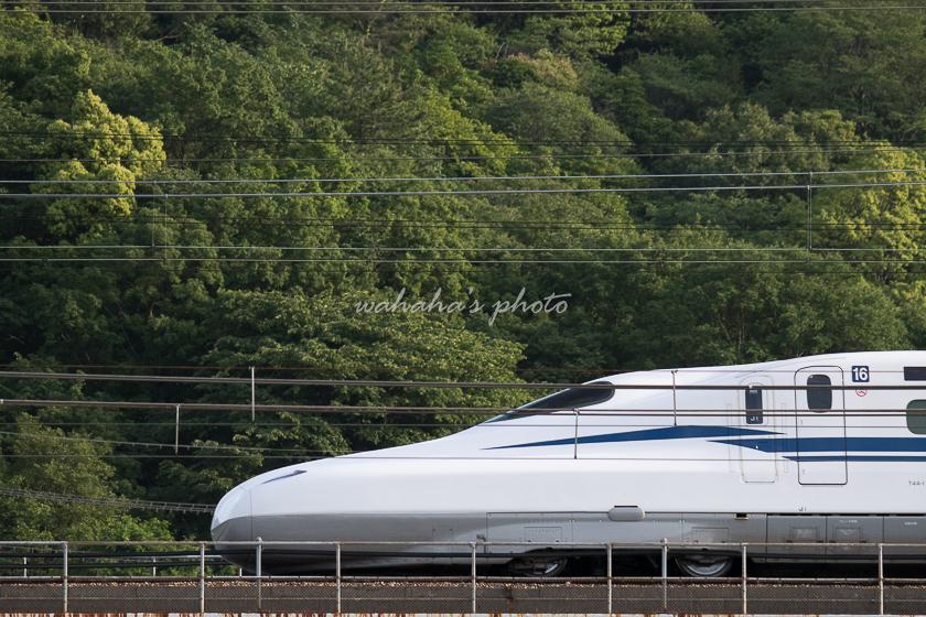 020523ichikawa-2.jpg