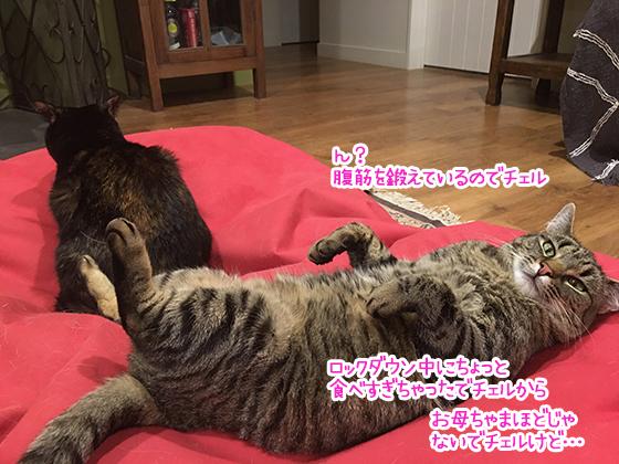 03052020_cat2.jpg