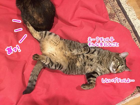 03052020_cat5.jpg