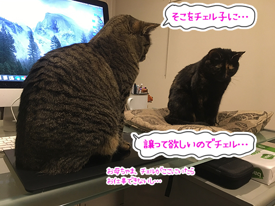 05062020_cat1.jpg